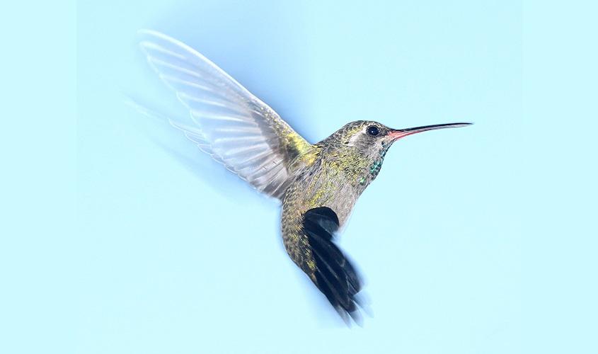 Belajar Kehidupan dari Alam, dari Binatang, dari Burung Kolibri